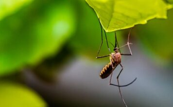 How to get rid of mosquitoes?